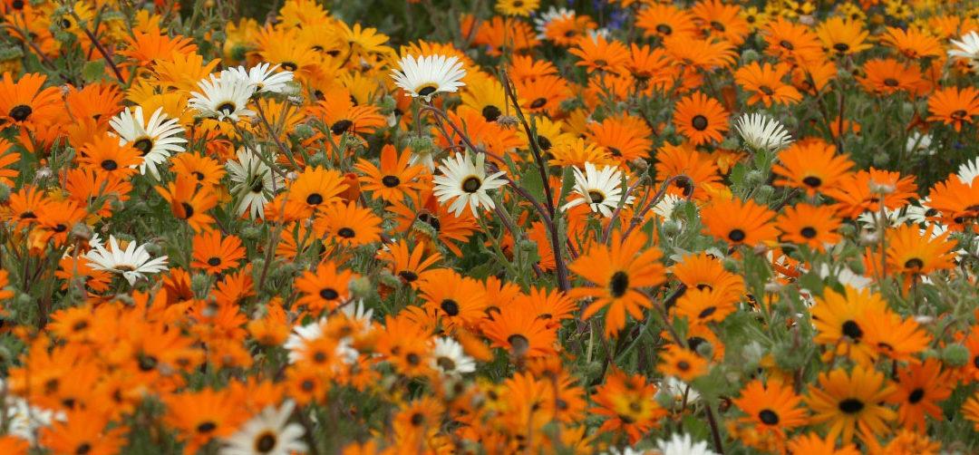 Flowers, Flowers everywhere…